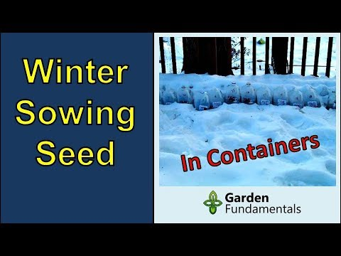 Sow Your Seedlings Now, In Winter, For A Healthier Garden In The Spring