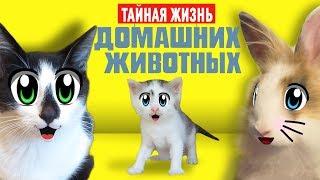 ТАЙНАЯ ЖИЗНЬ ДОМАШНИХ ЖИВОТНЫХ 2 ! Кот Малыш и Кошка МУРКА ОДНИ ДОМА как МУЛЬТИК Secret Life of Pets