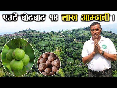 बोधिचित्तको खेतीबाट बार्षिक लाखौं आम्दानी - Bodhichitta farming in Nepal