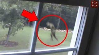 مازيكا 5 مخلوقات مخيفة صورتها عدسات الكاميرا في الغابة !! تحميل MP3
