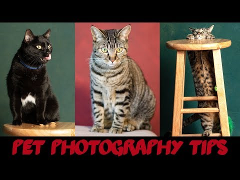 Pet Photography at Home - 5 Tips