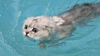 Funny Cats in Water Compilation 2015 - Video Youtube