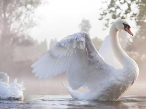 Каскад Белые птицы