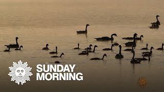 Nature: Birds in Montana