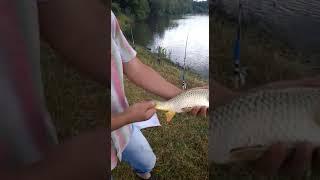 Платная рыбалка в селе московском ставропольского края