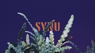 Kadr z teledysku Synu tekst piosenki Mikromusic