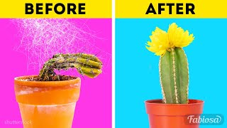 How to replant cactus? Basic gardening tips on growing cactus plant at home