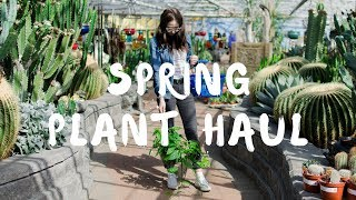 Plant Shopping & Spring Plant Haul 🌵✨