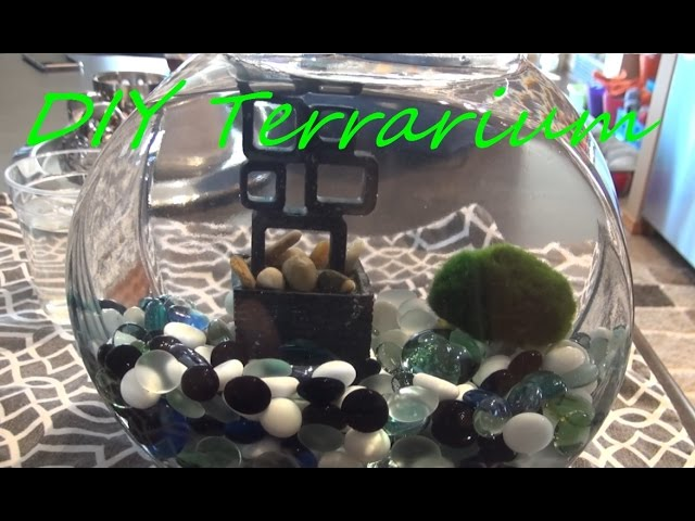 DIY Marimo Moss Ball Terrarium! FISHBOWL UPCYCLE