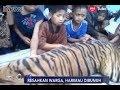 Sebulan Resahkan Warga, Harimau di Bunuh Pasca Ditemukan di bawah Rumah - iNews Malam 04/03
