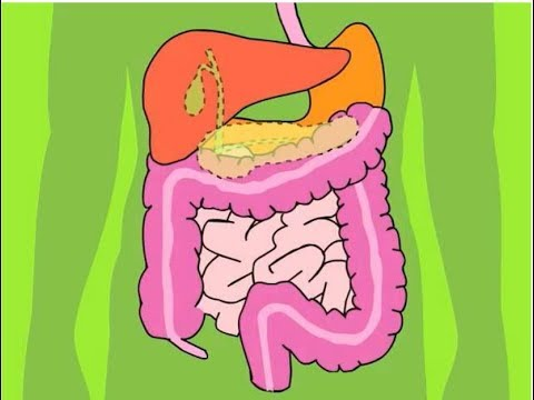Download System Digestive Motility part 3 in Stomach, Small Intestine Duodenum, Ileum Large Intestine HD Mp4 3GP Video and MP3