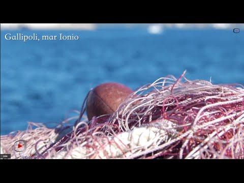 La pesca nel Mare Rosso dalla costa