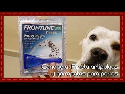 Conoce a: Pipeta antipulgas, garrapatas y piojos para perros Frontline