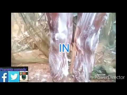 Krém és kapszula a pénisz megnagyobbodására