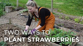 Two Ways To Plant Strawberries