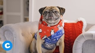 7 Stylish Dog Outfits for Winter | Chewy