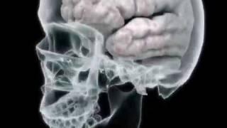 Your Brain on Drugs - Hydrocodone (College Health Guru)