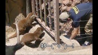 飼育員さんがきたー!カワウソ大喜び!上野動物園
