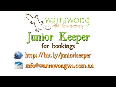 Junior Keeper Experience - NOW AT WARRAWONG!!!