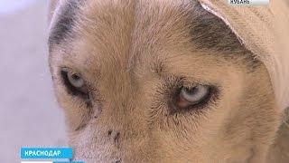 Собаку изуродовали до неузнаваемости