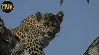 safariLIVE - Sunrise Safari - October 5, 2018