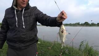 Чеснок в прикормку для рыбы