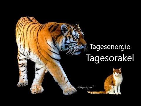Тагесоракел - Диенстаг 23.07.2019