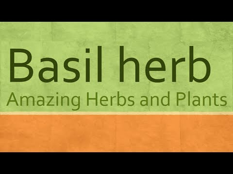 Video Health Benefits of Basil Herb - Basil Herb Health Benefits - Amazing Herbs and Plants