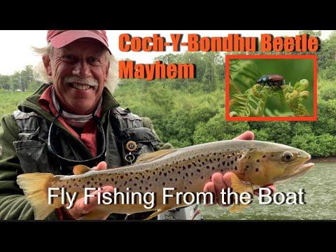 It's Coch y Bondhu Beetle Season, or is it? Large Still Water Fly Fishing from a Boat Flyfishing 101