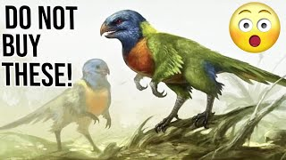 10 Reasons why you should not buy Rainbow Lorikeet Parrots!