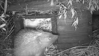 Wildlife Trail Camera - 3.5.2019