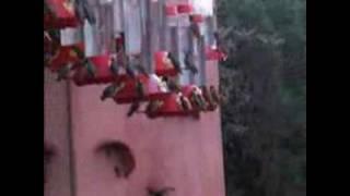 hummingbird heaven Video