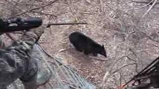 When Bears Go Wild