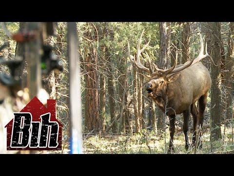 Annettas' Big Bull