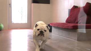 Disney Worlds Luxury Pet Resort, Best Friends Pet Care