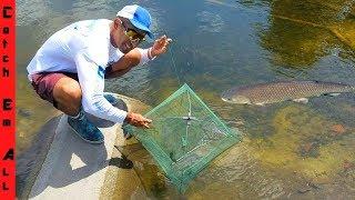 FOOD CHAIN FISHING TRAP CHALLENGE!