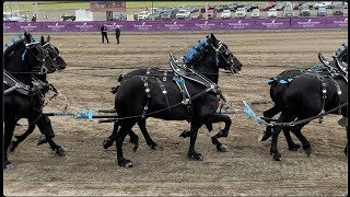 Draft Horse Show At Young Living Farm Utah, Percheron Shire Belgian Clydesdale