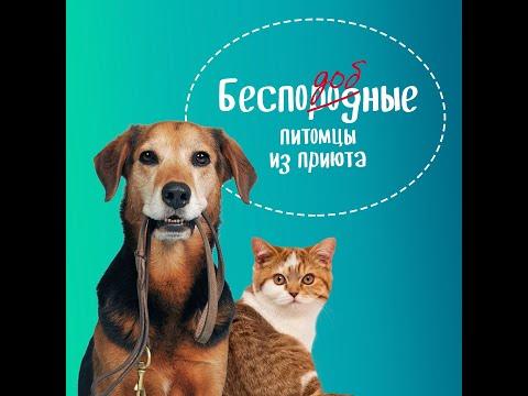 #7 Лекция «Самые распространенные болезни собак?», «Домовой ликбез», 04.05.2020
