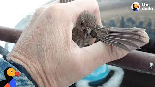 Download Youtube: Bird Frozen To Metal Fence Rescued by Kind Man | The Dodo