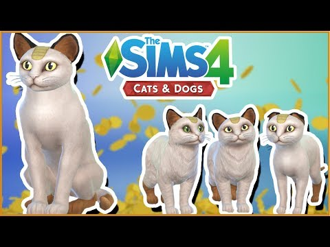 Meowth & His Mischievous Kittens!! 🐱🐶 Sims 4: Cats & Dogs