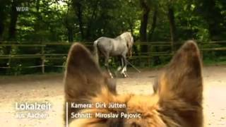 preview picture of video 'Pali Top Horse Of The Year 2012 TV-Beitrag'