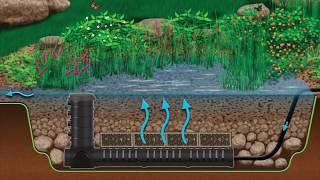 Wetland Filtration for Pond Health