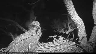 Big Bear Eagles * Simba Wakes Up Early After Sleeping Alone * Mom & Dad Assure Him They are Close By