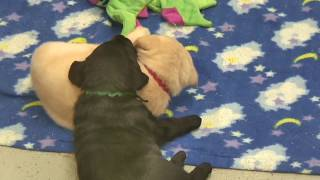 Puppy Time - Live Cam Highlight