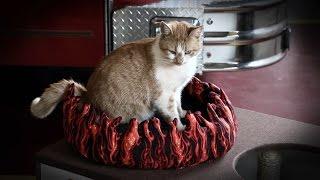 Flame, si Kucing Pemadam Kebakaran