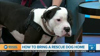 How To Welcome Your Rescue Dog Home