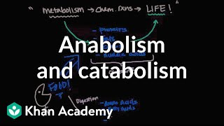 Overview of Metabolism - Anabolism and Catabolism