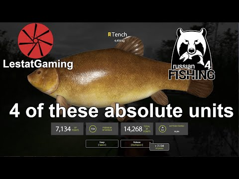 Old Burg - One session 4 trophy tench