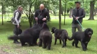 """Osnovano Udruženje za zaštitu životinja """"Meda - Šabac"""""""