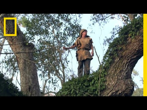 Colbert Climbs a Tree | Live Free or Die thumbnail
